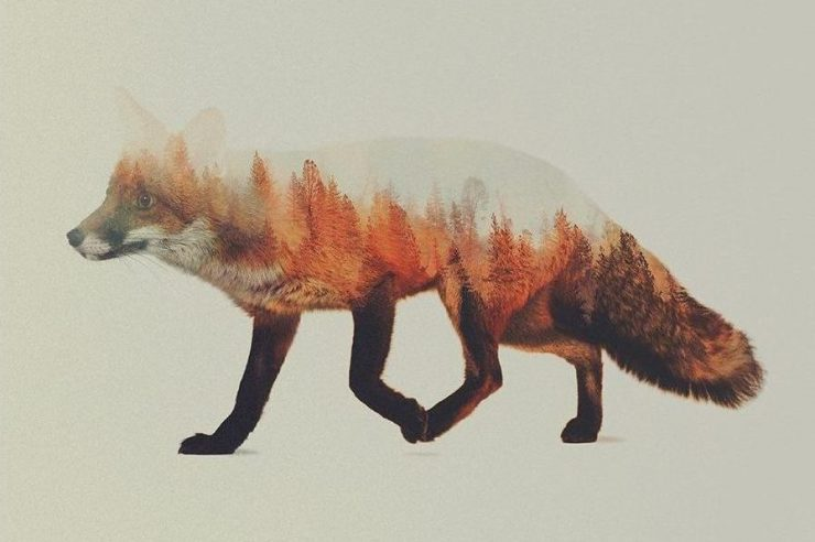 Andreas Lie, Norwegian Woods: The Fox, doppia esposizione digitale